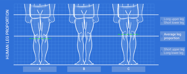 Leg-type-diagram