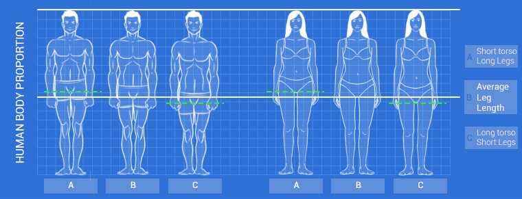 human body proportion diagram rev 2